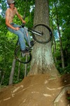 Sasah_off_tree